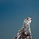 Ptarmigan Portrait (Say that 3 Times Fast) by Jay Ryser