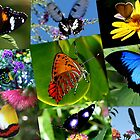 A Collarge of Butterflies by robmac
