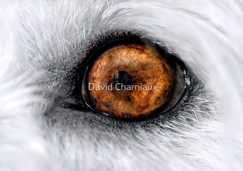 Tommy's eye by David Charniaux