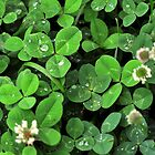 Find the Four Leaf Clover by PamelaJoPhoto