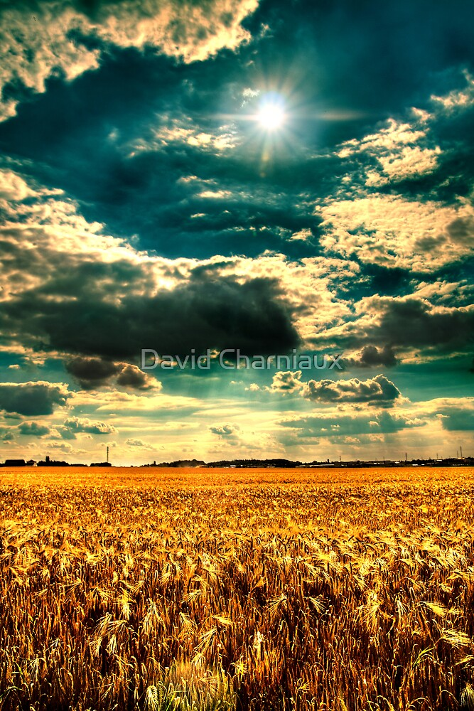 Summer field by David Charniaux