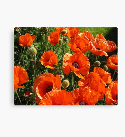 poppies - to remember & say thank you to all the wonderful soldiers Canvas Print