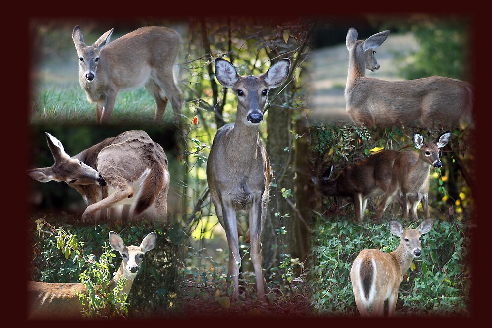 Deer Collage by Lori Walton