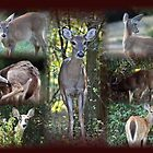 Deer Collage by Lori Walton