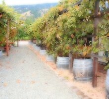 Vineyard  by zumi