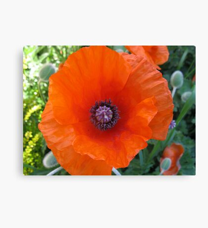 poppies  - in memory of my Great Grandfather John Aspinall Canvas Print