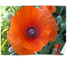 poppies  - in memory of my Great Grandfather John Aspinall Poster