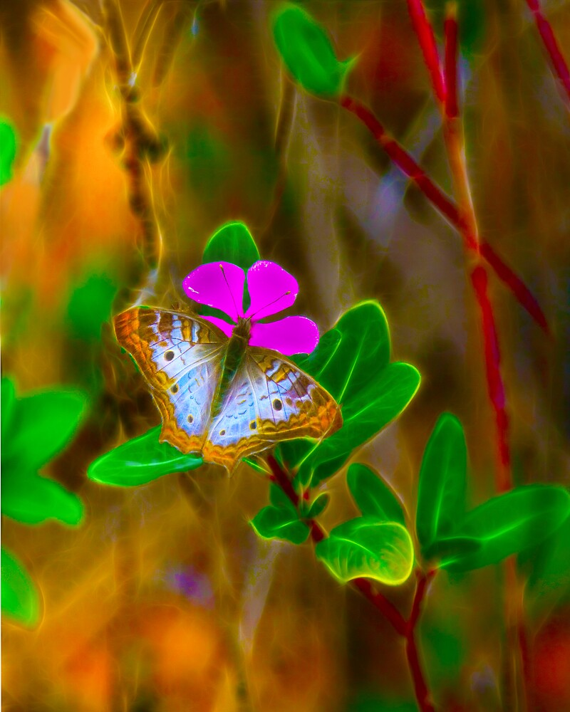 Softlight Butterfly by Michael Wolf