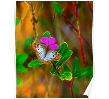 Softlight Butterfly Poster