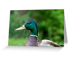 One Hungry Mallard Greeting Card