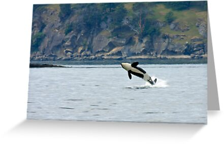 Playful Orca Whale by JWallace