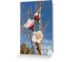 Blossom and blue sky Greeting Card