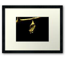 Egyptian Fruit Bat Framed Print