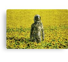Stranded in the sunflower field Canvas Print