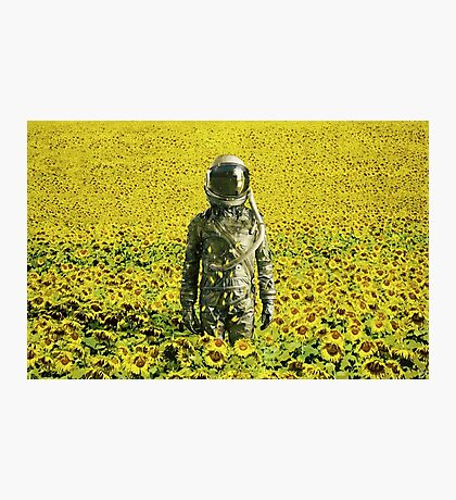 Stranded in the sunflower field Photographic Print