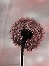 pink dandelion dreams by Angel Warda