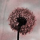 pink dandelion dreams by Angel Warda