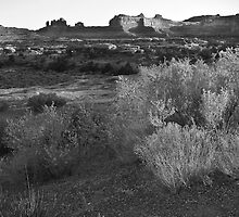 Sagebrush by snapshotjunkie