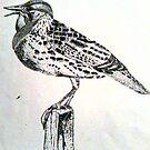 Meadowlark 1 by Kendra Taber