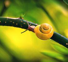 golden snail by palinta