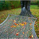 Above the Hammock  by Wayne King