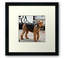 Unbelievable Airedale Terrier Framed Print
