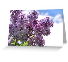 Lilacs on Blue Greeting Card