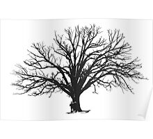 embrace the tree Poster