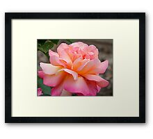 Petal Soft Framed Print