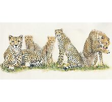 African Cheetah Wrap Photographic Print