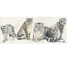 Snow Leopard Wrap Photographic Print