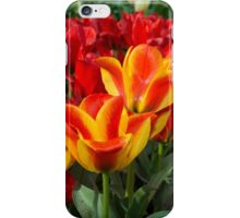 Red yellow Tulips  iPhone Case/Skin