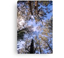 360 degrees of trees Canvas Print