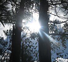 Shining through by Steph Reynolds