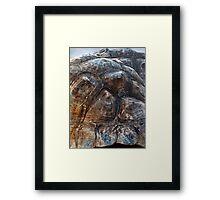 Galapagos Tortoise Shell Framed Print