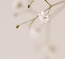 Baby's Breath by AnnieD