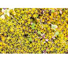 Young Moss in Spring Photographic Print