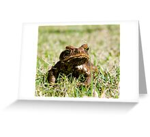 cane toad 1 Greeting Card