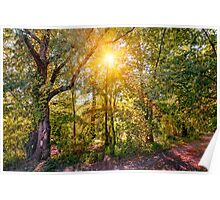 Sun in the Autumn Forest Poster