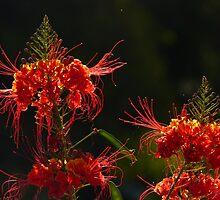 blossoms of a tree - flor de un arbol by Bernhard Matejka