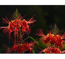 blossoms of a tree - flor de un arbol Photographic Print
