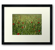 Red Poppies Growing In A Corn Field  Framed Print