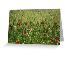 Red Poppies Growing In A Corn Field  Greeting Card