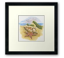 Sea shells on a beach Framed Print