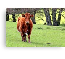 Brown Cow in Green Field Canvas Print