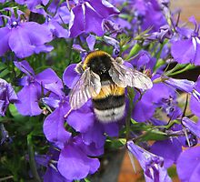 Bumble-bee in purple by Hans Bax