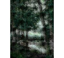 Trees & Water Photographic Print