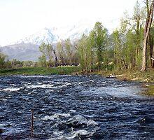 Provo River by Bellavista2