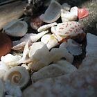 Shells by beckett