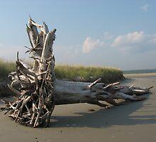 Barrier Beach Driftwood, Wells, ME by Judi FitzPatrick